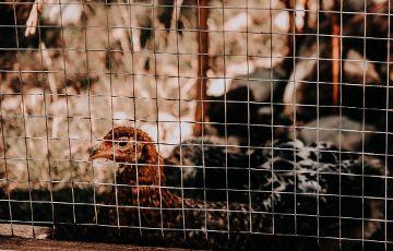 Hühnerstall der Mittagsbetreuung